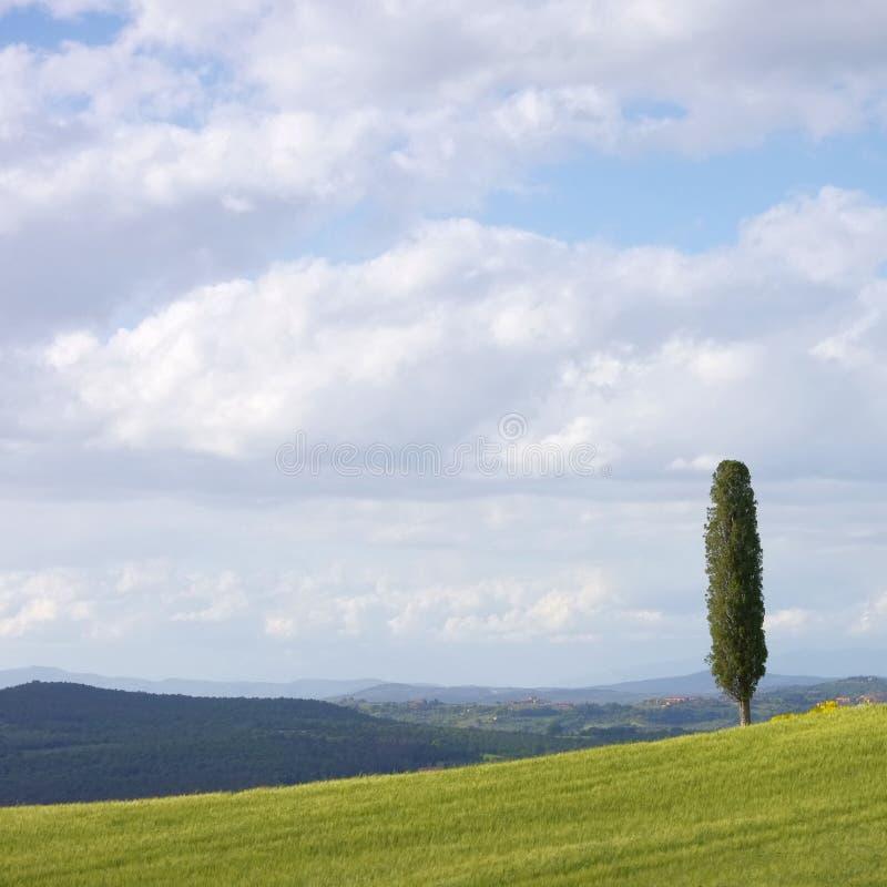 Toskana-Feld Und Zypressenbaum Stockbild