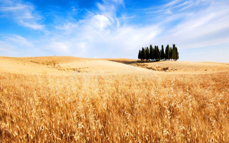 Download Toskana, Italien stockbild. Bild von land, geöffnet, draußen - 2660831