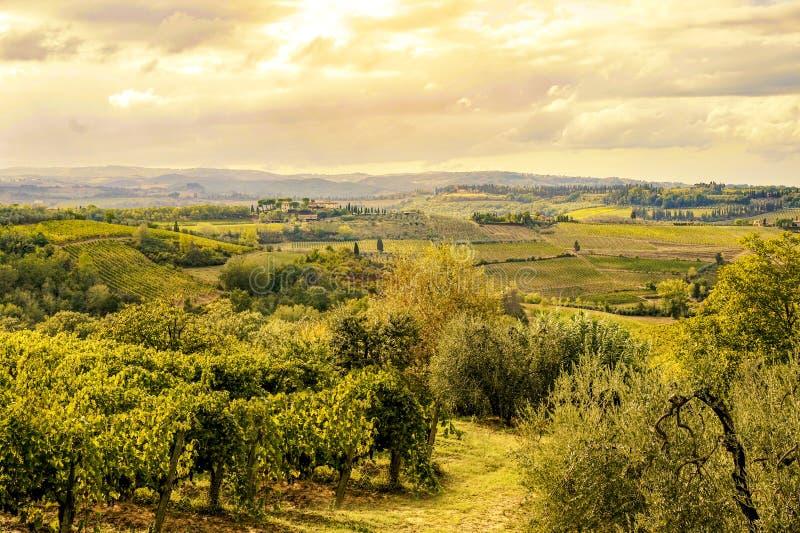 Toskana Italien - 09 14 2017: Weinberg nahe bei warmen Farben San Gimignanos lizenzfreie stockfotografie