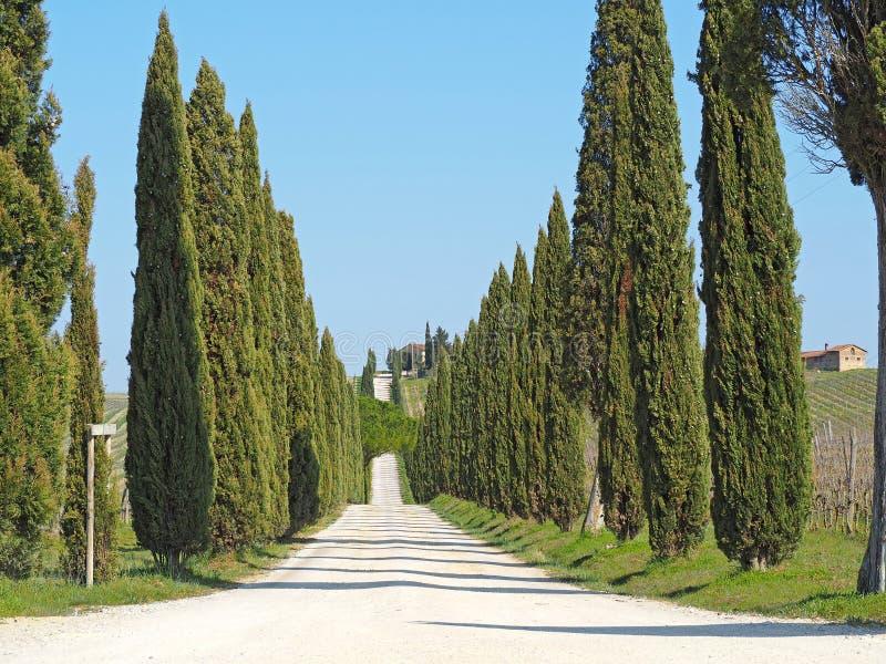 Toskana, Landschaft einer Zypressenallee nahe den Weinbergen stockbilder