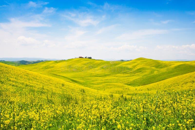 Toskana-Landschaft mit Feld von Blumen in Val d Orcia, Italien lizenzfreie stockbilder
