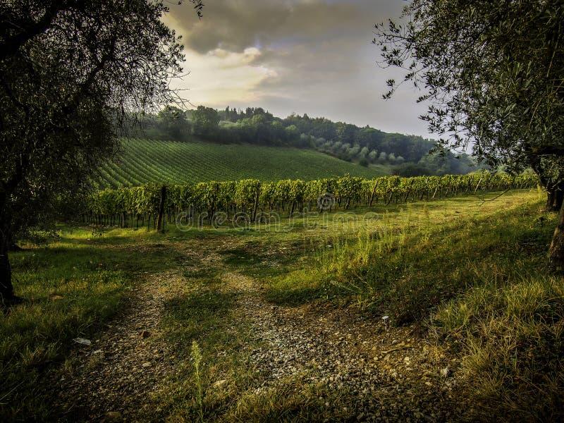 Toskana-Weinberge stockbild