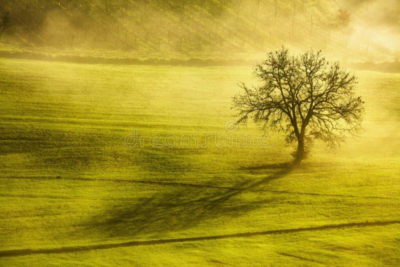 Toskana-Wintermorgen, einsamer Baum und Nebel Italien stockfotografie