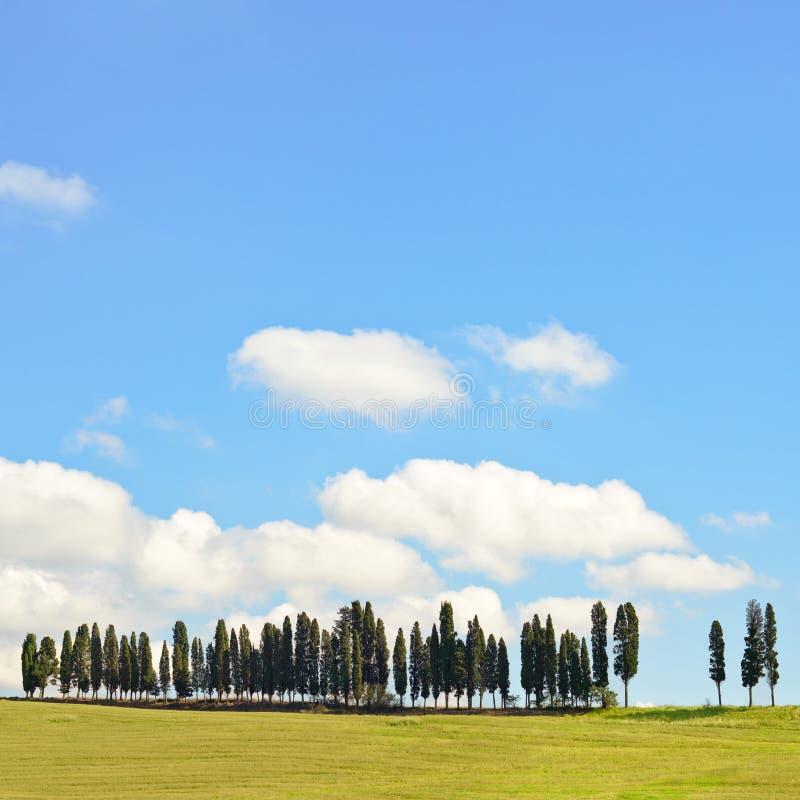 Toskana, Zypresse-Bäume, Chianti Landschaft, Italien. lizenzfreies stockfoto