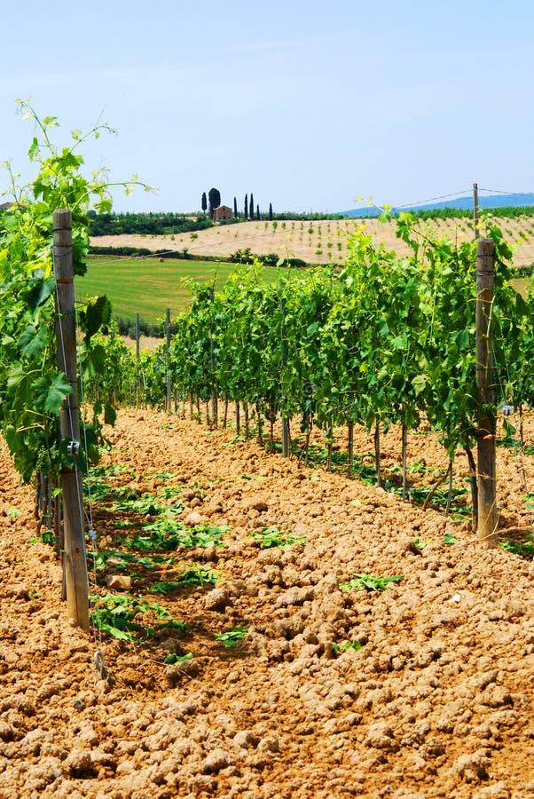 toskania winnice zdjęcie stock
