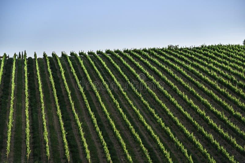 toskania winnice obrazy stock