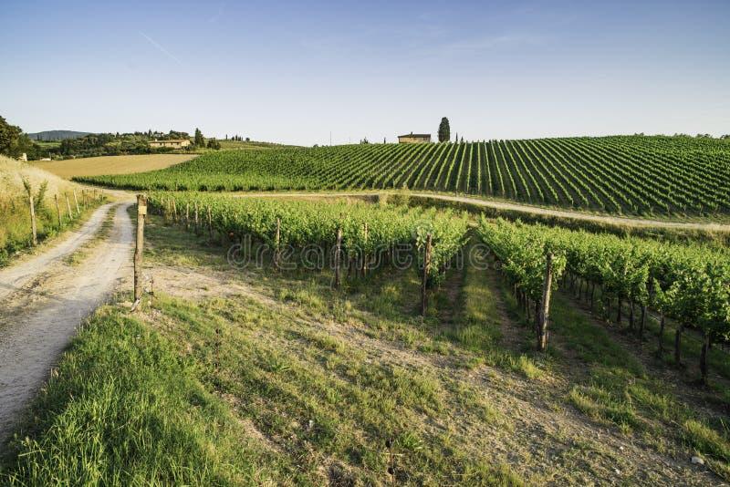 toskania winnice zdjęcia stock