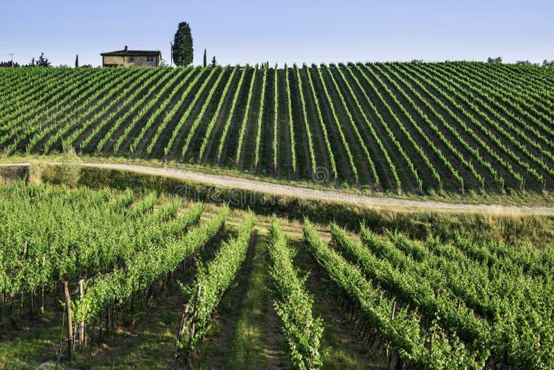 toskania winnice zdjęcie royalty free