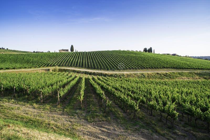 toskania winnice zdjęcia royalty free