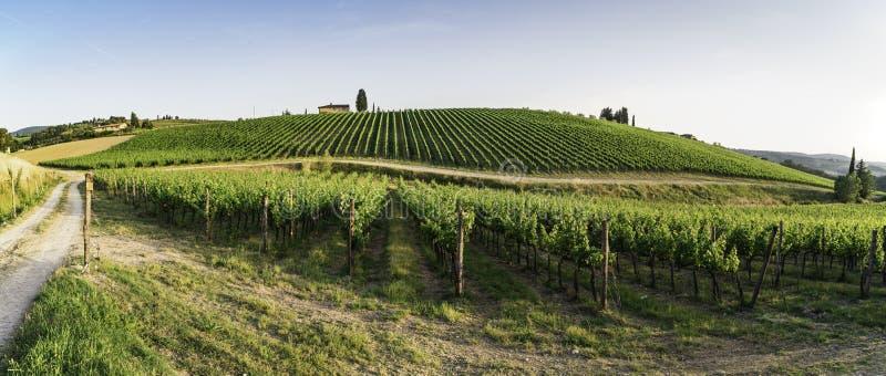 toskania winnice obraz royalty free