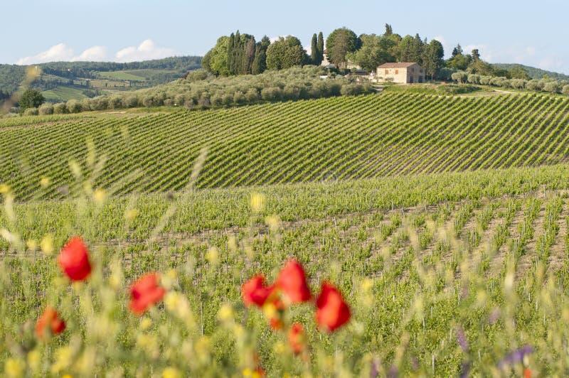 Toskanische Landschaft lizenzfreie stockbilder