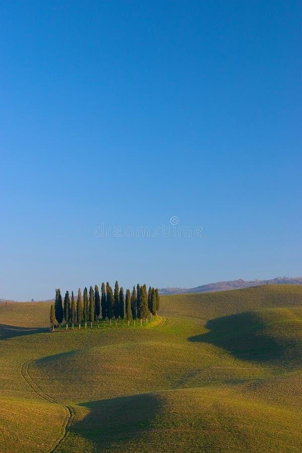 Toskanische Landschaftszypresse stockbild