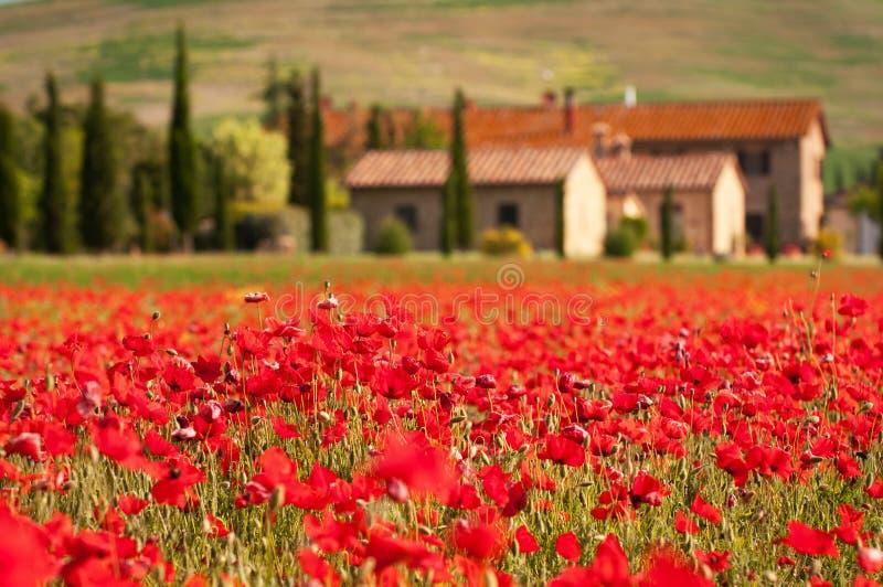 Toskanische rote Mohnblumen lizenzfreies stockbild