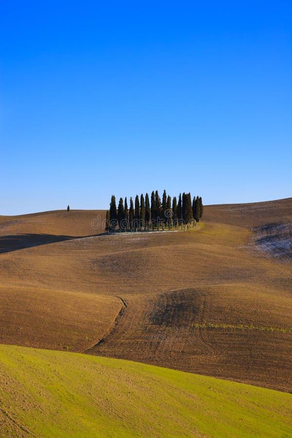 Toskanische Zypressebäume. Val d'Orcia nahe Siena. lizenzfreies stockfoto