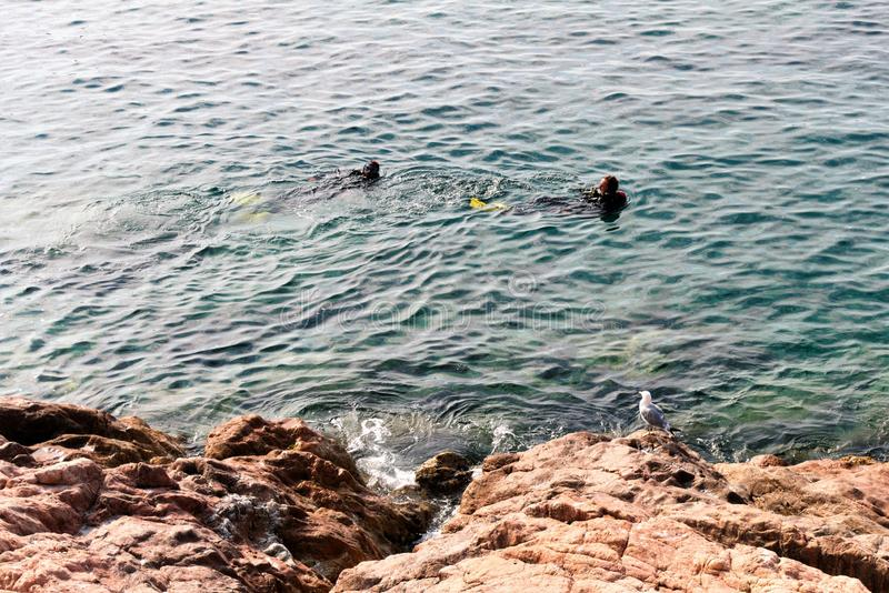 Tossa de Mar Spanien, Augusti 2018 En seagull ser dykare i havet med intresse arkivfoton