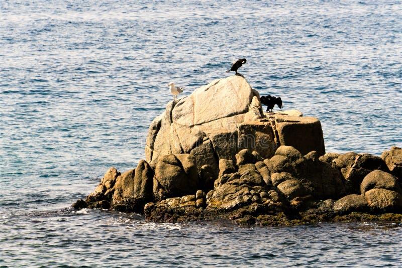 Tossa de Mar Spanien, Augusti 2018 Havsfåglar på ett ensamt vaggar nära kusten arkivfoton
