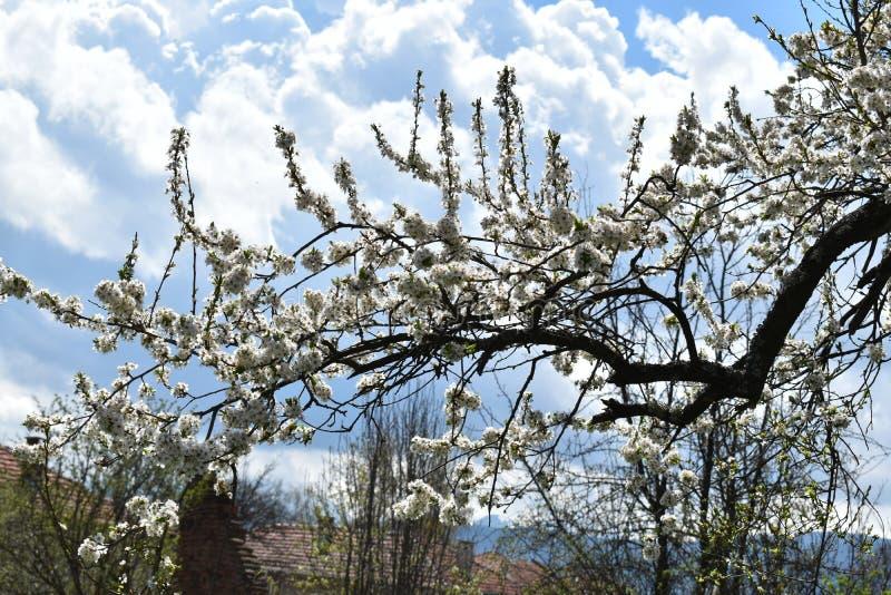 Tot bloei gekomen boom stock afbeeldingen