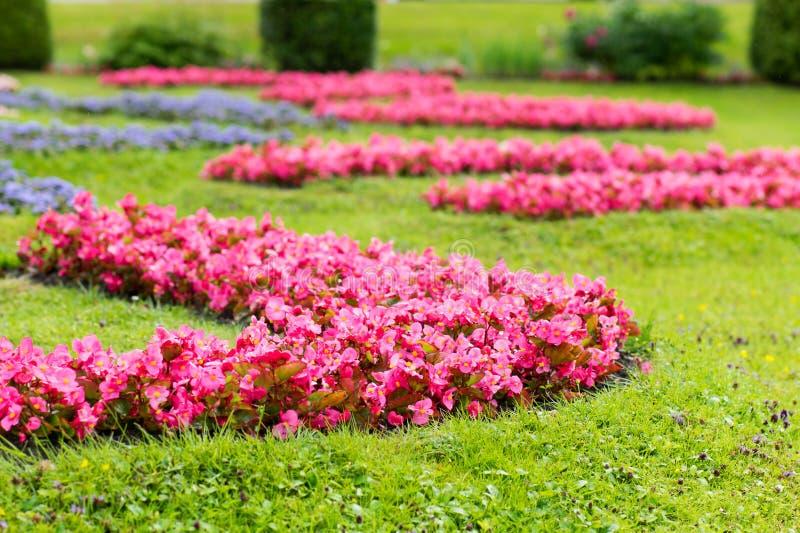 Tot bloei komend Gazon in Landschapspark royalty-vrije stock fotografie