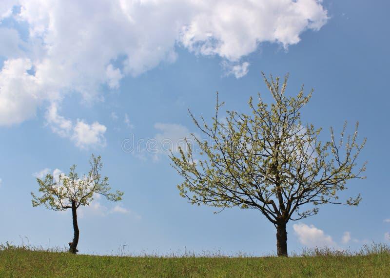 Tot bloei komende appelboom. stock afbeelding