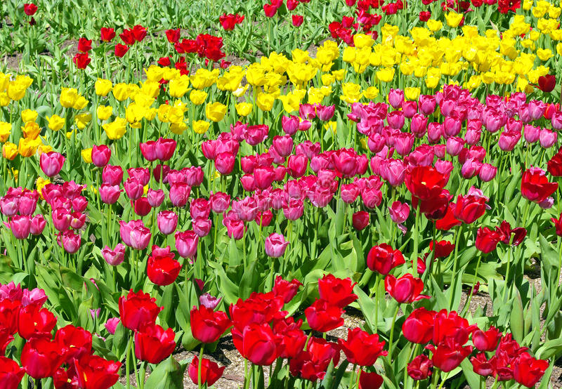 Tot bloei komende bloemen stock fotografie