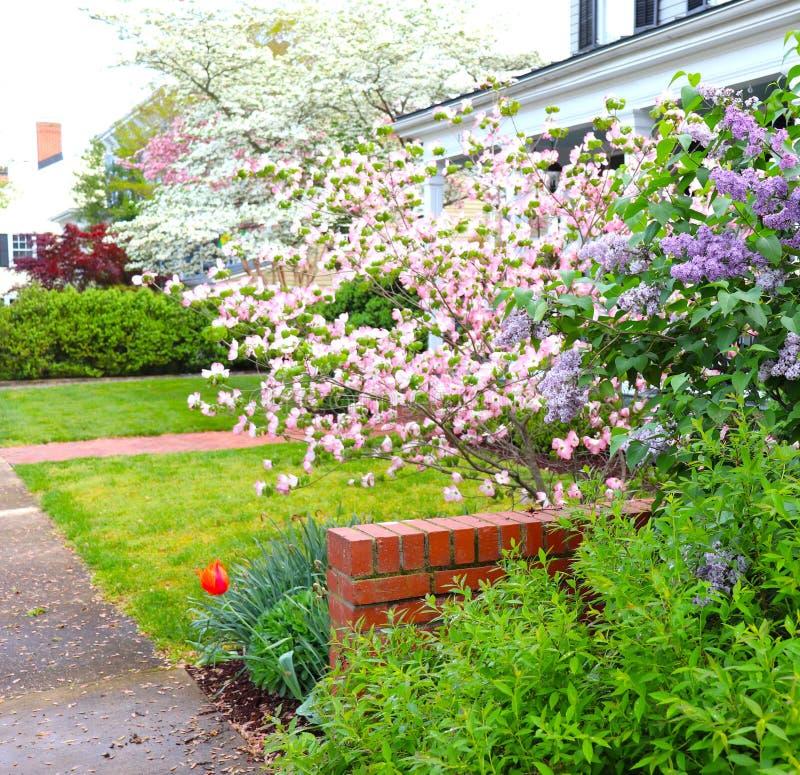 Tot bloei komende Bomen, Lilac Bush, en Één enkele Tulp royalty-vrije stock foto's