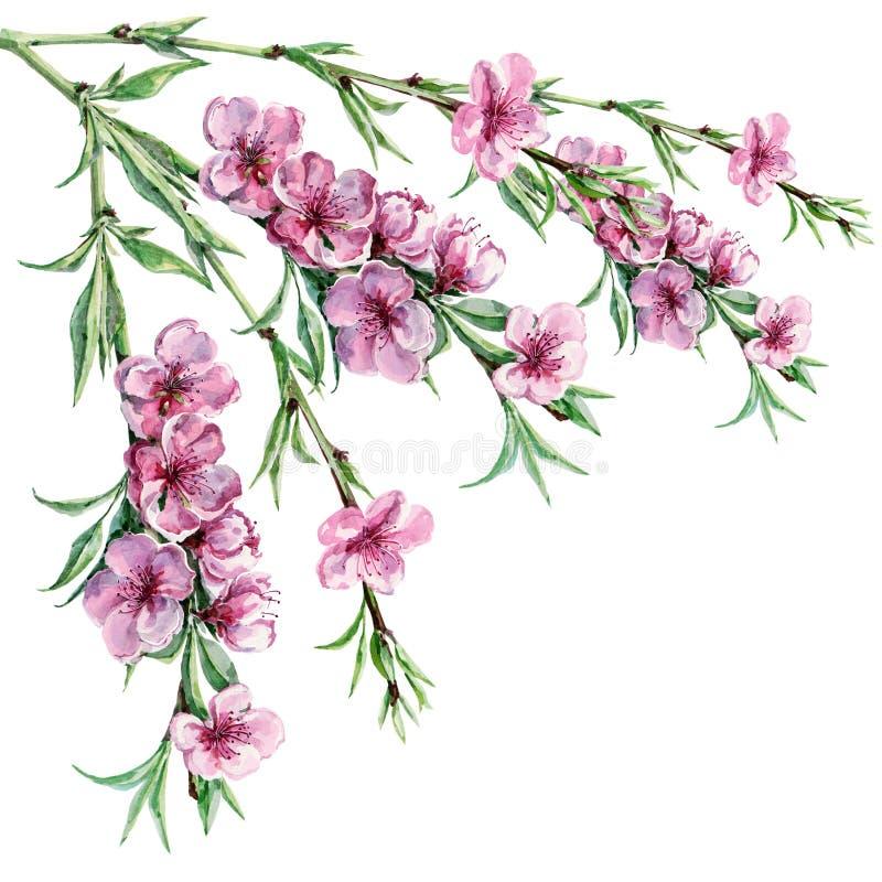 Tot bloei komende perzik, waterverf vector illustratie