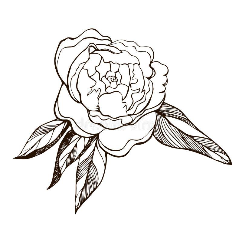 tot bloei komende pioenbloem Hand getrokken overzichtsillustratie van bloeiende pioen Gegraveerde de bloemschets van de inktpioen stock illustratie