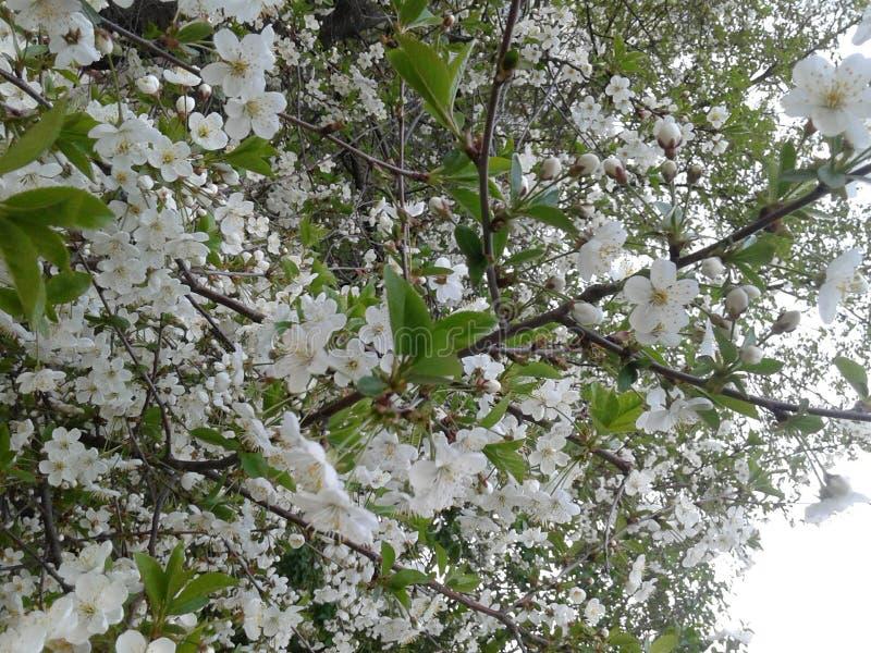 Tot bloei komende tuin stock foto