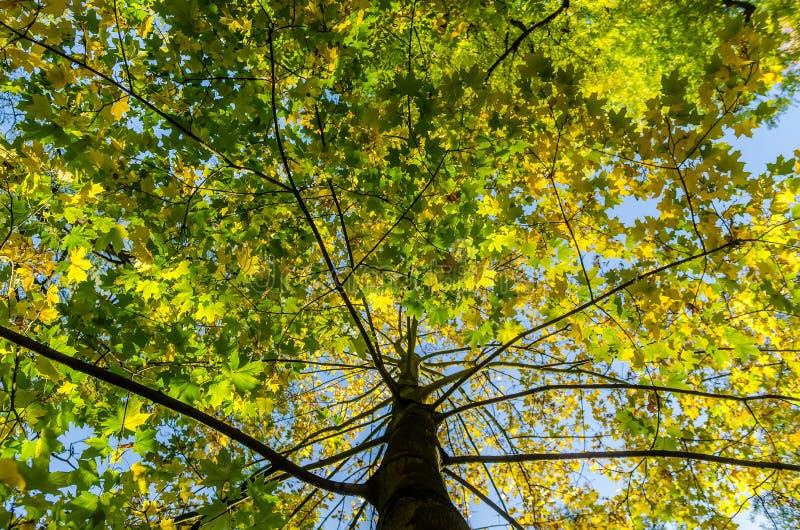 Tot treetop royalty-vrije stock afbeeldingen