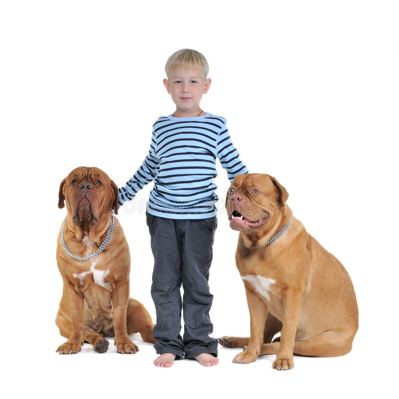 Total safety concept - boy with dogs royalty free stock photography
