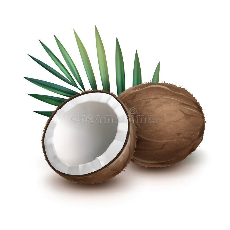 Totalité et demi de noix de coco illustration stock