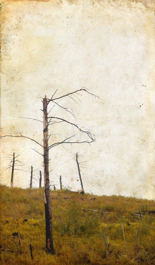 Tote Bäume auf Grunge Hintergrund stockbild