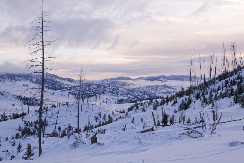Tote Bäume in der Winterlandschaft lizenzfreie stockfotografie