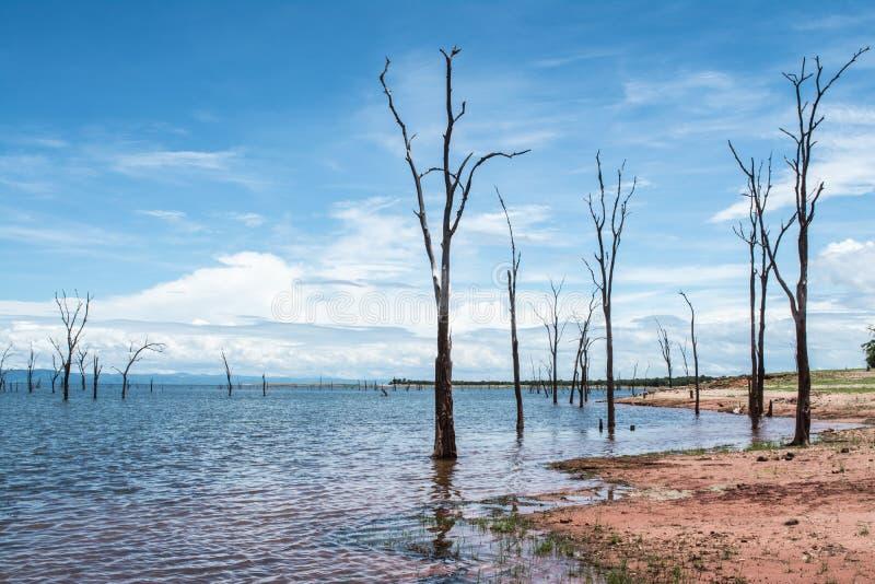 Tote Bäume, die aus dem Wasser heraus am See Kariba haften stockfotografie