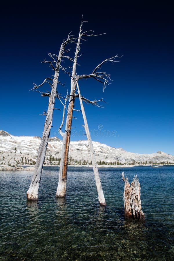 Tote Bäume im Mountainsee lizenzfreie stockfotografie