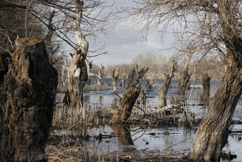 Tote Bäume im Stauwasser stockfoto