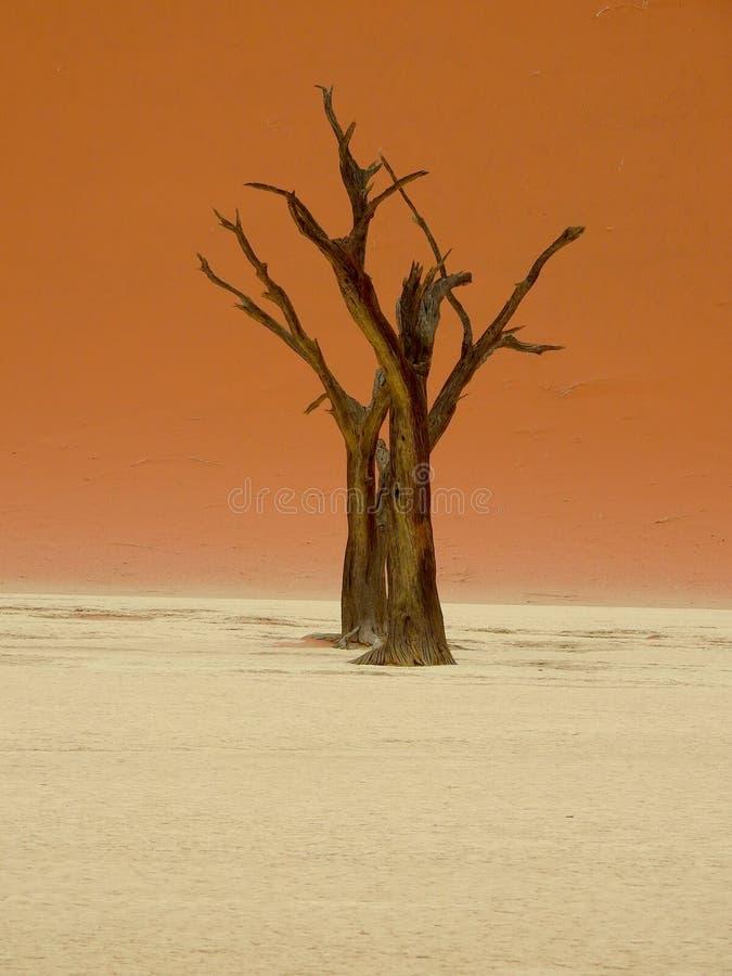 Tote Bäume in Namibia-Wüste lizenzfreies stockfoto