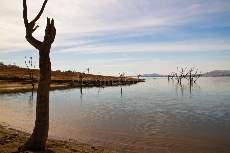 Tote Bäume See Hume lizenzfreie stockbilder