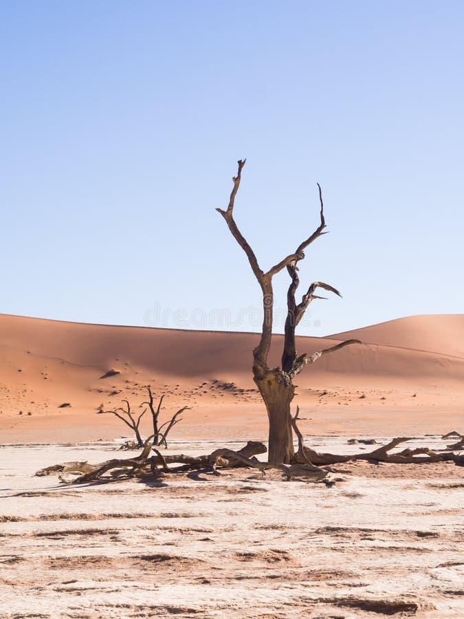 Tote Bäume in totem Vlei, Namibia lizenzfreie stockfotografie
