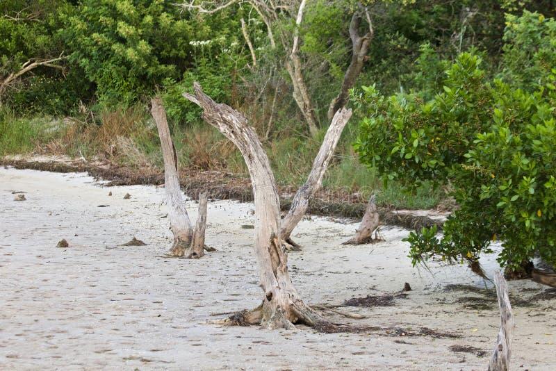 Tote Bäume unter üppigem Laub stockbilder