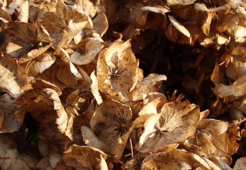 Tote Blätter stockfoto