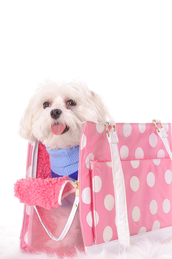 Tote feliz do curso do doggy imagem de stock royalty free
