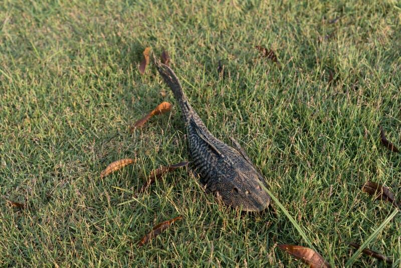 Tote Fische auf dem Gras lizenzfreies stockfoto