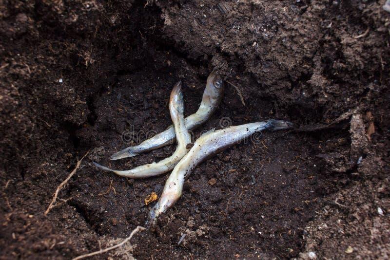 Tote Fische aus den Grund lizenzfreies stockbild