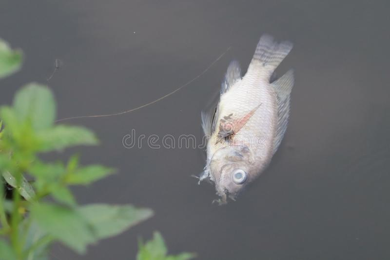 Tote Fische und Fliege lizenzfreie stockfotos