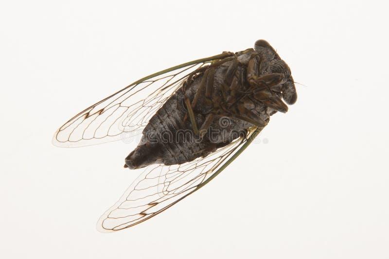 Tote Fliege stockfotos