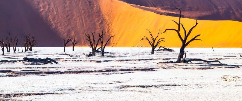 Tote Kameldornenbäume in Deadvlei trocknen Wanne mit gebrochenem Boden mitten in roten Dünen Namibischer Wüste, Sossusvlei lizenzfreie stockfotografie