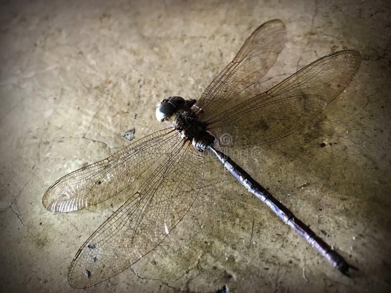 Tote Libelle auf dem Zementboden lizenzfreie stockbilder