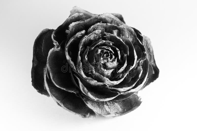 Tote Rose lizenzfreie stockbilder