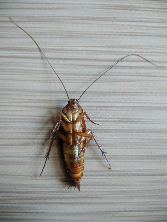 Tote Schaben schlugen ein Insektenvertilgungsmittel lizenzfreie stockfotografie